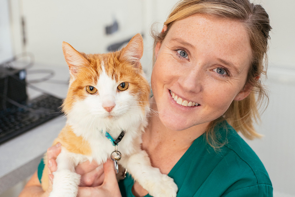 Smiling veterinary nurse holding a ginger and white cat