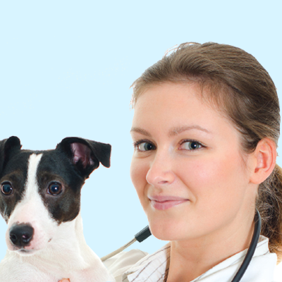 Vet or VN with stethoscope holding a dog
